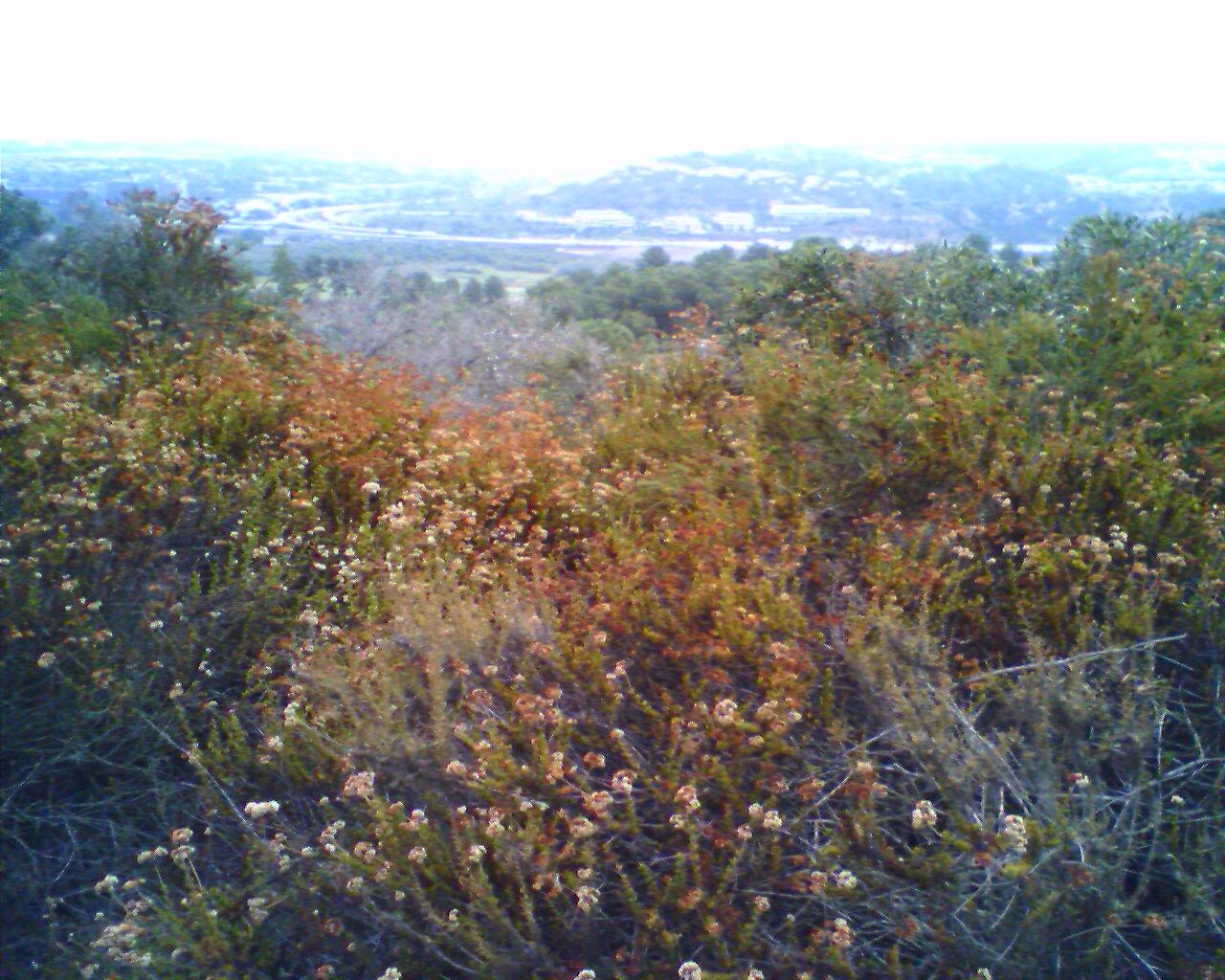 At Del Mar Hill